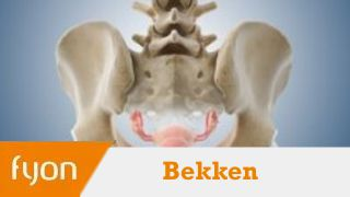 Bekkenfysiotherapie